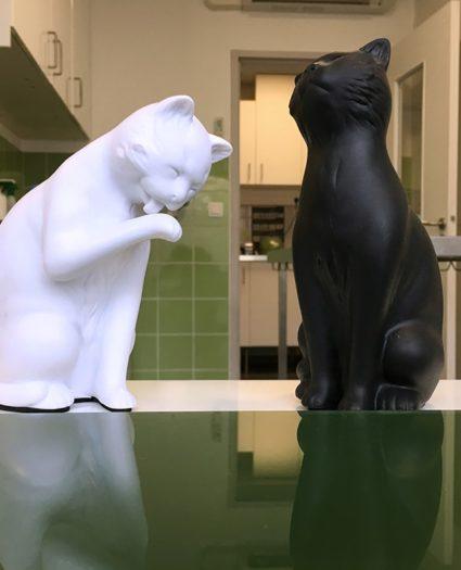 chats-bureaux