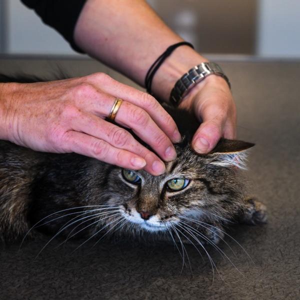 Ostéopathie chat